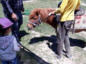 Fiziksel ve zihinsel engelli çocuklara at üzerinde tedavi