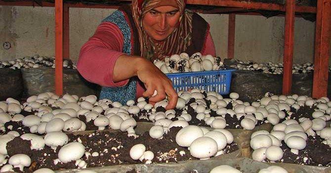 Korkuteli'nde mantar üretimi 6 bin kişiyi istihdam ediyor