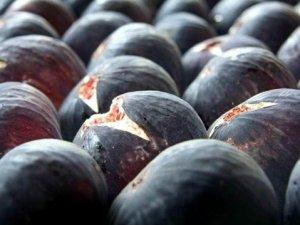 İngiliz Kraliyet ailesinin gözdesi siyah incir ihracatı başlıyor