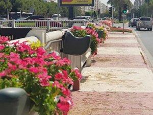 Antalya Büyükşehir Belediyesi şehri çiçeklendirdi