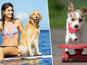 Köpeğinizle birlikte tatile çıkın 3.000 Sterlin kazanın