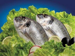 'Balıkları oltalar değil objektifler yakalayacak''