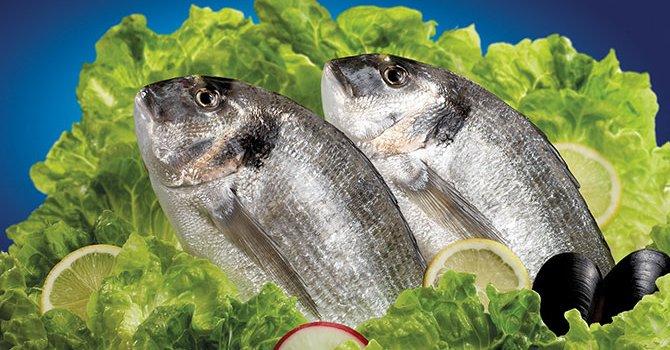 Balık için turizm heba olmasın