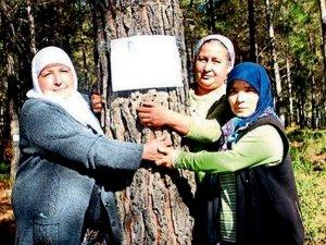 Fethiye'de 35 yıllık çam ağaçlarının kesilmesine tepki