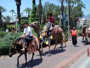 Side'de her yıl 5 bin turist tarihi yerleri deveyle geziyor