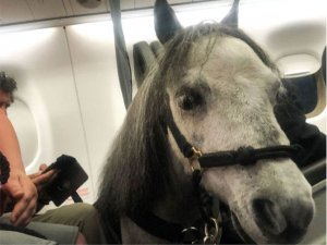 Uçaklarda köpekler dışında hayvan taşınması yasaklanıyor