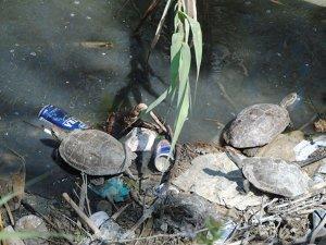 Caretta Caretta'ları Akdeniz'denaylon poşet öldürüyor