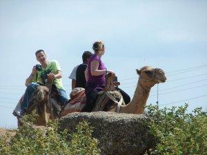 Evde bekleyen develer, sezonun başlayınca tura çıkacak