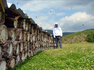 45 ülkeye 5 bin 548 ton bal ihracatı yapıldı