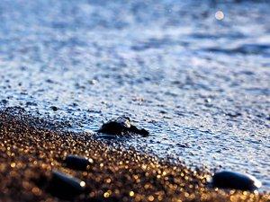 Çıralı'da Caretta Caretta yavruları denizle buluştu