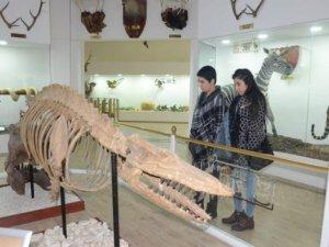 Zooloji Müzesi, eğitim merkezi oldu