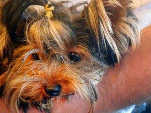 Havalimanı karantinasında ölen köpek hukuk savaşı başlattı