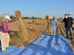 Ülkede üretilen susamın beşte birini Manavgat üretiyor
