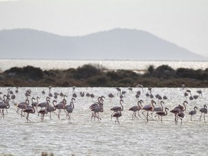 Kuşların yaşam alanı Gediz Deltası UNESCO'nun adayı