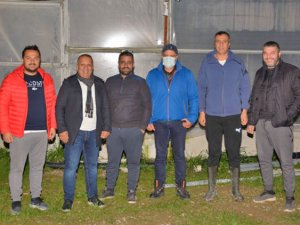 MATSO: Manavgat'ta 20 bin dönümde muz üretimi yapılıyor
