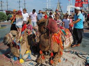 Avrupalı turistler gelmezse; deve turları tarih olabilir