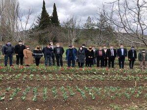 İbradı'da 10 bin lale soğanı çiçek açtı