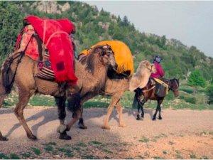 Sarıkeçili Yörüklerin 40 gün sürecek göçü başladı