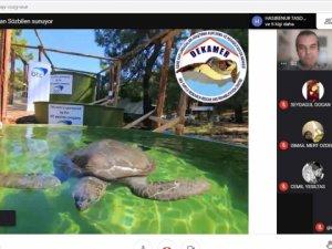 Karacasu'da deniz kaplumbağaları anlatıldı