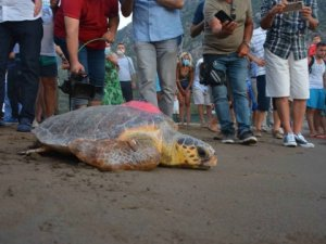 Deniz kaplumbağası 'Talay' tedavi sonrası uydudan izlenecek