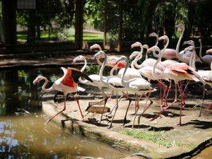 Antalya da 21 flamingo koruma altına alındı