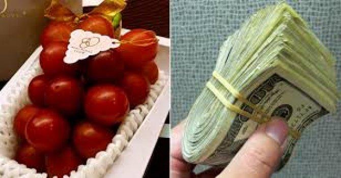 Kemer'de bütçe 23.150.000,00 YTL
