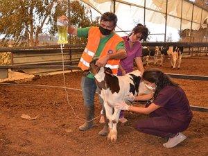 Yangından etkilenen hayvanlar tedavi ediliyor