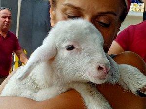 HAYTAP, Manavgat'ta yanan hayvanlar için Sahra Hastanesi kurdu