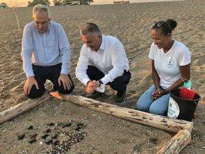 Belek'te 60 yavru kaplumbağa plaj yürüme bandındacan verdi
