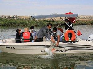''İç Suları Balıklandırıyoruz'' Projesi ile Mogan Gölü'ne 100 bin sazan
