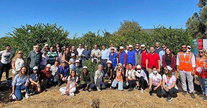 Gönüllüler mandalinaları ihtiyaç sahipleri için hasat etti