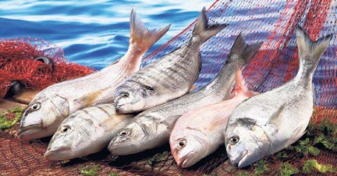 Türk balığını taşımak için kıyasıya yarış