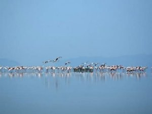 Türkiye'nin ikinci büyük gölü Tuz Gölü de yok oluyor