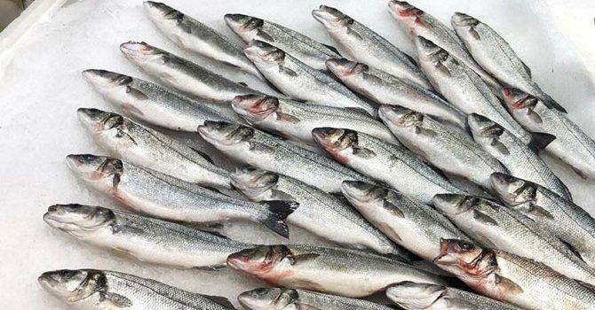 Yeni Irak'ın ilk batılı turistleri