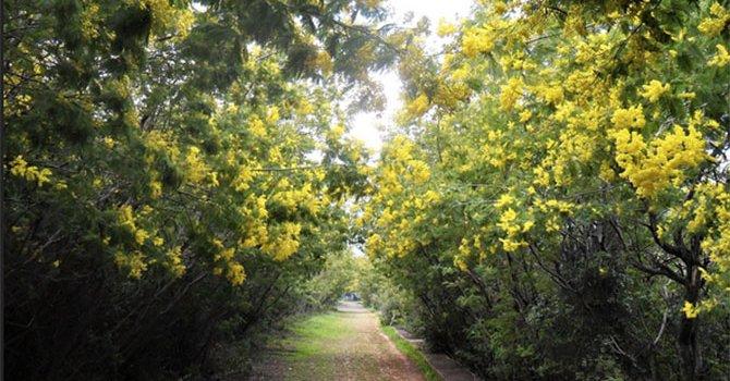 Otel sahibi ölü bulundu