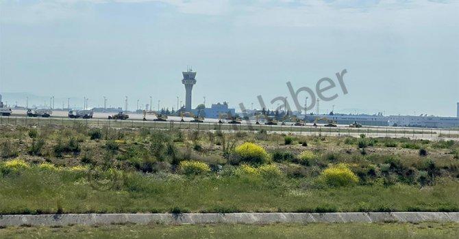 Üç Beyaz Bengal Kaplanı