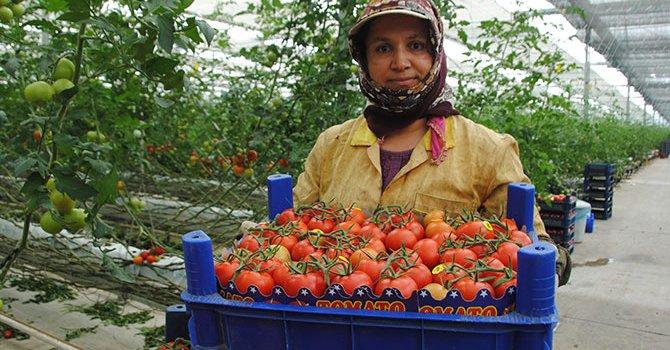 Qantas'dan Antarktika'ya gezi
