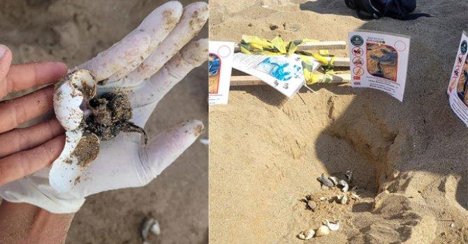 Onur Air'in 25 uçağı Airbus A320