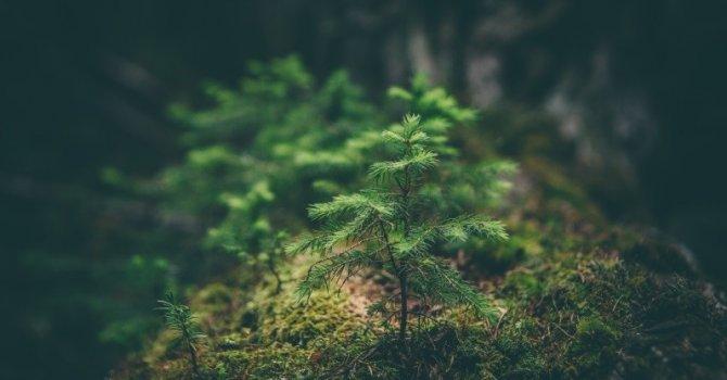 Türkçe konuşan liderler zirvesi