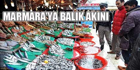 Marmara'ya balık akını oldu