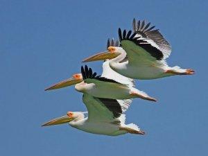 Kuş Cenneti'ne kamera sistemi kuruluyor