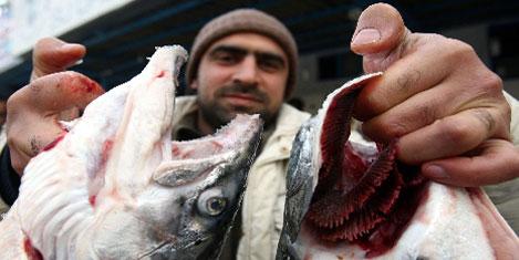 Tesco Kipa'dan Avrupa'ya balık