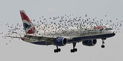 ISS, kuşlarla mücadele edecek
