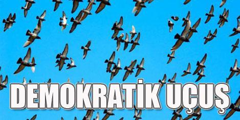 Güvercinler demokratik uçuyor