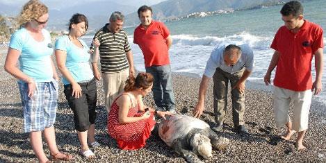 Caretta ölüsünü, köpek bekledi