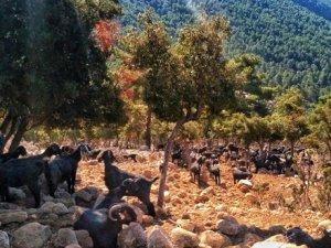 Türkiye'nin en güzel yürüyüş yolu Likya'da
