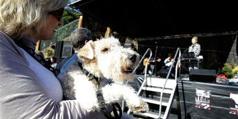 Köpekler için konser verildi