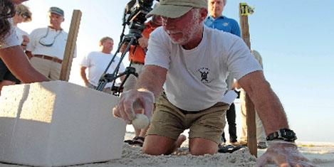 Deniz kaplumbağaları korumada