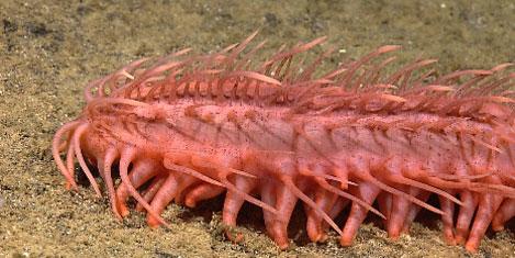 40 yeni canlı türü keşfedildi