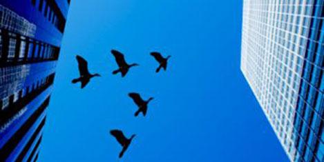 Kuşlar için ışıklar kapatılacak